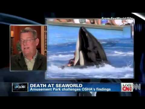 OHSA SeaWorld CNN interview David Kirby and Carol Ray flv   YouTube