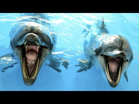Mind Blowing Facts About Dolphins