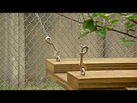 Bobcat Rehab Intensive Care Cam 03-20-2018 08:24:35 - 09:24:36