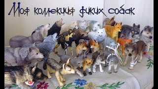 Моя коллекция фигурок диких собак, волков, лис и т.д. (Schleich, Papo, Safari ltd, ELC)