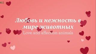 Любовь и нежность в мире животных/ Love and affection animals
