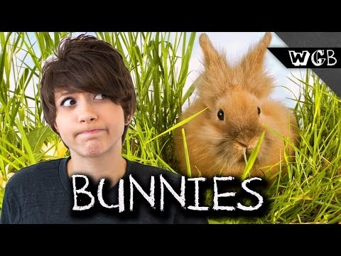 How Fast Can Bunnies Reproduce?