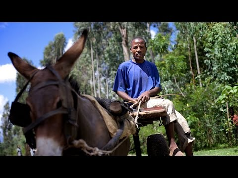First Responders Making Ethiopia More Resilient - Dejene and his donkey