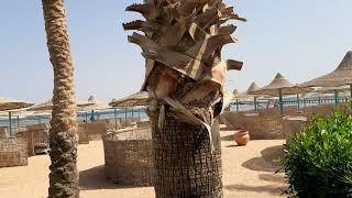 Египет Шарм Эль Шейх Пляж отеля Magic World Sharm club bay jaz