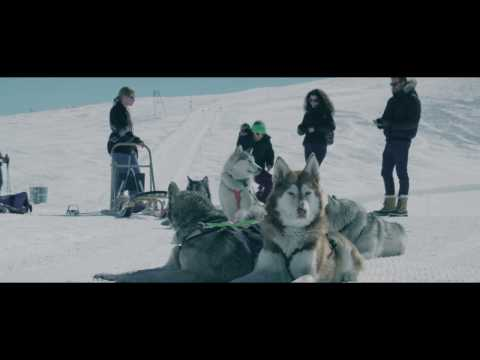 Dog sled ride - 2016 edit