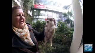 В Сочи есть месь собак с хомяками!!! Цена 3000 руб!!! SOCHI-ЮДВ |Недвижимость Cочи ||Квартиры в Cочи
