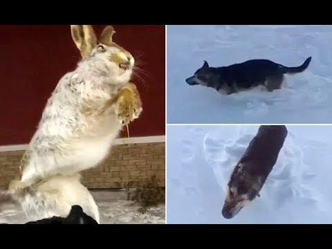 Animals FROZEN SOLID amid  56C conditions in Kazakhstan