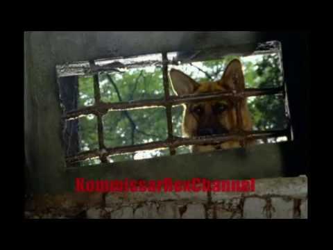 Rex chien flic - La mort est au bout de la route (Extraits)