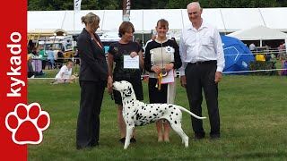 Dalmatian - Ch. Solbo's Kayo - Best Of Breed - Leeds 2014