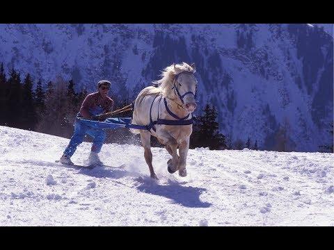 Skijoring - The Incredible Horse Skiing Sport