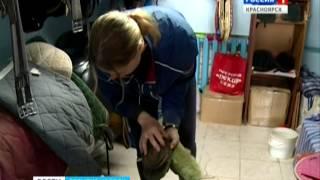 В Красноярске набирает популярность конный спорт