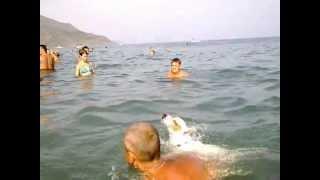 собака купается Крым Рыбачье