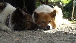 Familienhund Elo - Porträt der Hunderasse