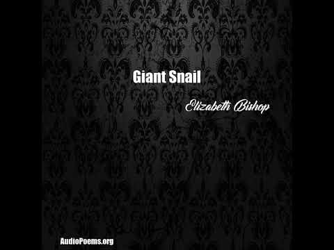 Giant Snail (Elizabeth Bishop Poem)