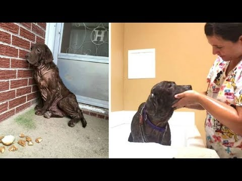 Homeless Dog Has Best Reaction To Her First Ever Bath