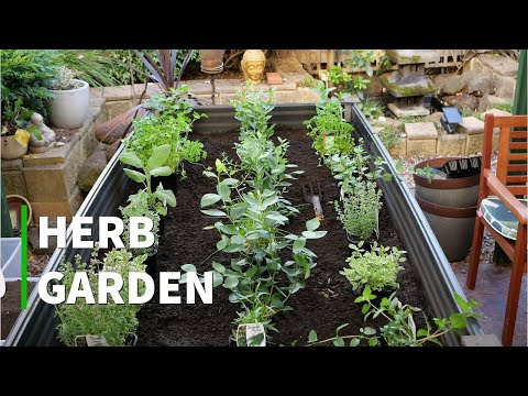 Planting our Herb Garden Bed