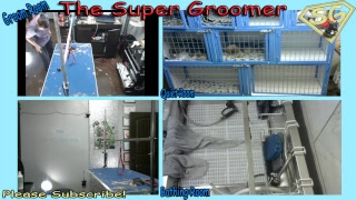 2018/11/13  Dogs Being Groomed Live