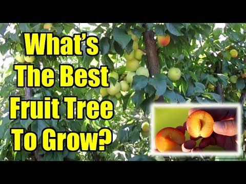 3 Tips For Choosing The Best Fruit Trees To Grow In Your Area 👍🌳🍎