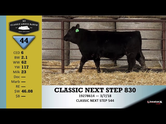 Classic Angus Ranch Lot 44