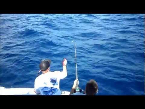 Driftwood Fishing Aruba