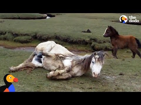 Baby Horse Refuses To Leave Injured Mom's Side | The Dodo