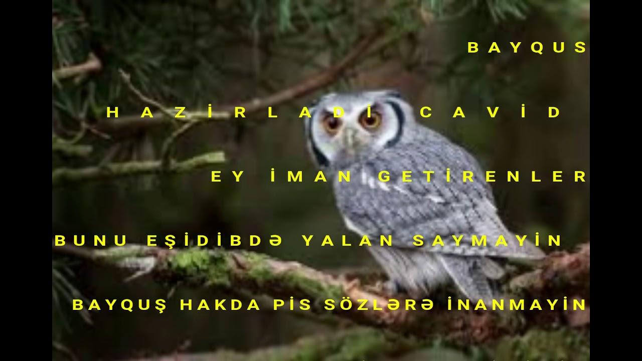 Bayquş peyğəmbərlər söhbəti