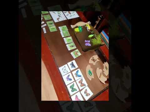 Ciclo de vida de la Mariposa Montessori