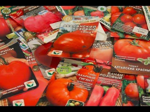 Какие Томаты Я Больше Не Буду Сажать! Семена Томатов. | помидоров | хорошие | томатов | рассаду | огороде | миняева | семена | отзывы | лучшие | саду