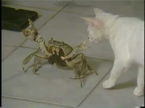 FUNNY CATS  (this one terrorizing a poor crab...)