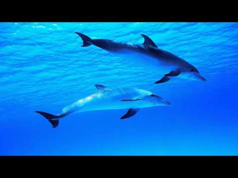 8 Hours Relaxing Music Dolphin Sounds   Sleep Background   Meditation   Spa   Yoga   Tai chi