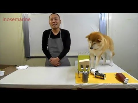 Increible perro ayudante de cocina youtube for Ayudante de cocina funciones