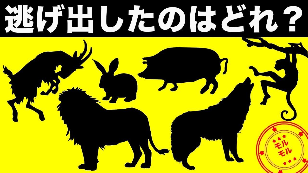診断 動物 性格