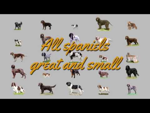 All spaniels great and small