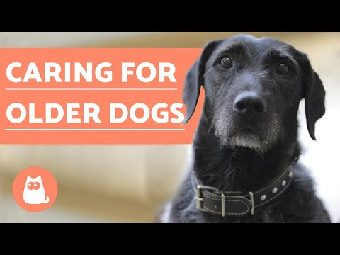 Senior Dogs  Habitual Behavior Problems