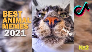 Cute and Funny TikTok Pets 2021 that Will Cheer You Up 100% 😄🥰