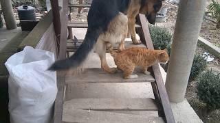 Dog vs Cat | Dog and Cat sex | Собака и кошка секс