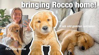 bringing home my 8 week old golden retriever puppy! (first days)