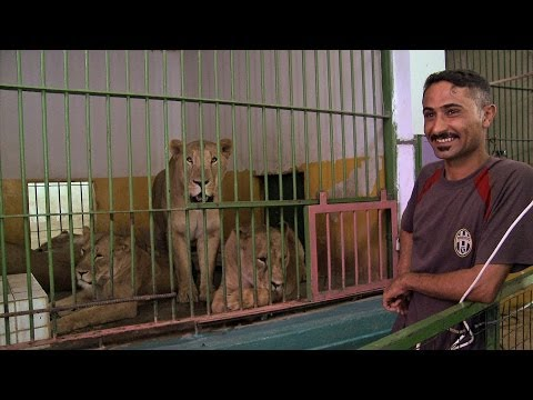 RAW: Saddam's lions fit in Baghdad