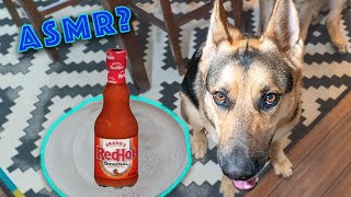 Giving My German Shepherd Hot Sauce!