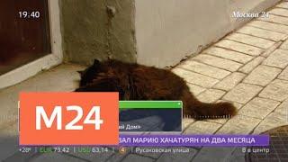 За котом Бегемотом теперь будут следить с помощью GPS - Москва 24