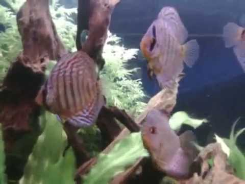 Aquarium rena 600l amazonien youtube for Aquarium 600l