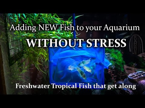 How To Add Aquarium Fish To Your Tank With Minimal Stress Compatible Fish Species Community Tank