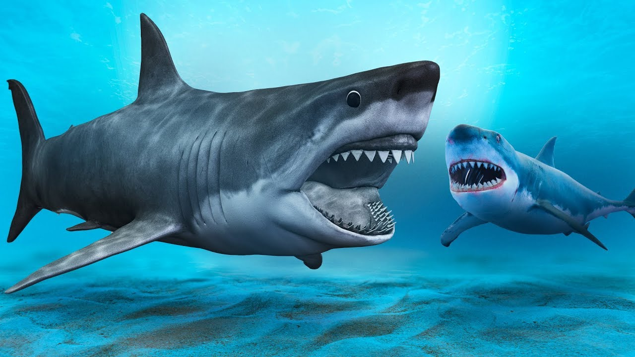 A Shark Scarier Than the Megalodon Could Exist - YouTube