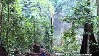 Forest destruction and wildlife in Kalimantan - Karmavision