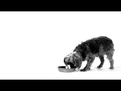 ROYAL CANIN MINI DOGS