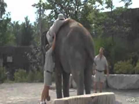 como subir a los lomos de un elefante - YouTube