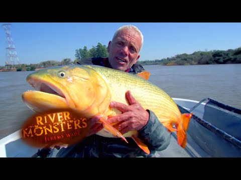 MONSTER Golden Dorado Catch! | MASSIVE MONSTER | River Monsters