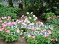 SIYA BA ANG DAHILAN-by-Jessa Zaragosa(w/lyrics)created by:Zairah