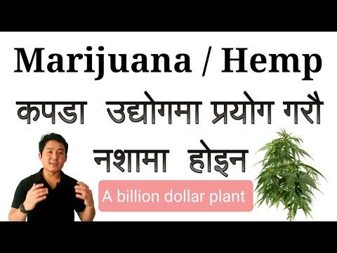 Marijuana/ Hemp should be legal in Nepal for Fiber, Clothing & Medicine. Marijuana legal or illegal