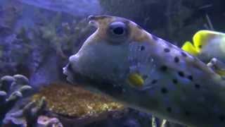 National Aquarium Movie